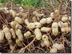 peanuts2